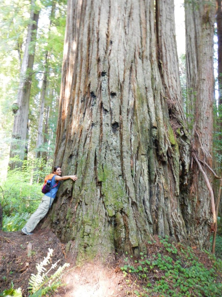 Aug 2013 - Hugging Red Wood trees in Northern California.